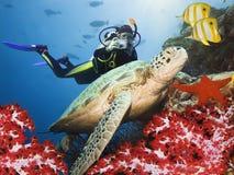 undervattens- grön sköldpadda Arkivfoto