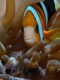 Undervattens- grannar royaltyfria bilder
