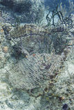 Undervattens- haveri Royaltyfri Bild