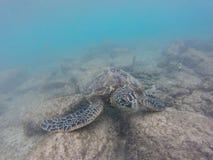 undervattens- havssimningsköldpadda arkivfoto