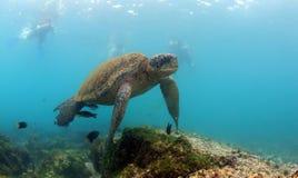 Undervattens- havssköldpadda Fotografering för Bildbyråer
