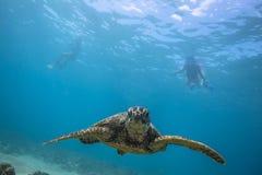 undervattens- havssköldpadda royaltyfria bilder