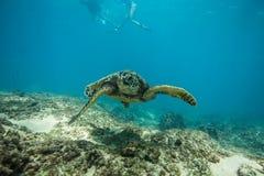 undervattens- havssköldpadda royaltyfri foto