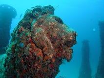 undervattens- head lion Arkivfoton