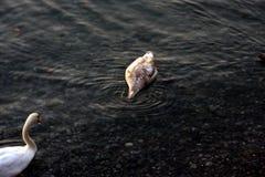 undervattens- jakt royaltyfri bild