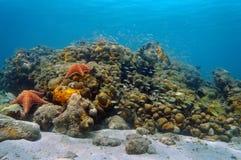 Undervattens- karibisk korallrev och stim av fisken Arkivbild