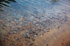 Undervattens- kiselstenar Arkivbild