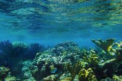 undervattens- korall arkivbild