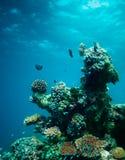 undervattens- korall Arkivfoto