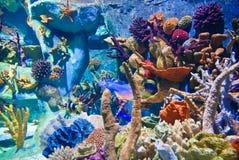 undervattens- koraller Royaltyfri Fotografi