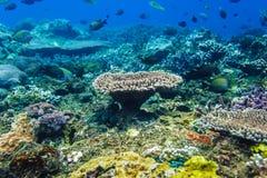 Undervattens- koraller och tropisk fisk i Indiska oceanen Arkivbilder