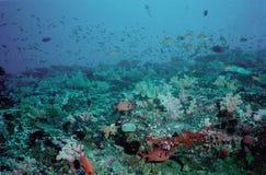 undervattens- koralllivstidsrev Fotografering för Bildbyråer