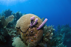 undervattens- korallrev Royaltyfria Bilder