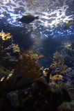undervattens- korallrev Arkivbilder