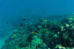 Undervattens- korallrev för hav eller för hav Sommarkall Arkivfoto