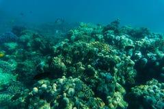 Undervattens- korallrev för hav eller för hav Sommarkall Arkivbilder