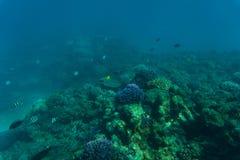 Undervattens- korallrev för hav eller för hav Sommarkall Arkivbild