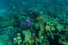 Undervattens- korallrev för hav eller för hav Sommarkall Royaltyfria Bilder
