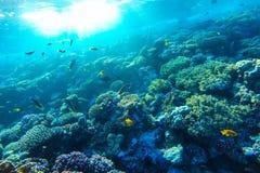 Undervattens- korallrev för rött hav Royaltyfri Bild