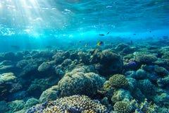 Undervattens- korallrev för rött hav Arkivbild
