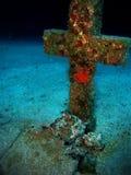 Undervattens- kors med bläckfisken Arkivfoto