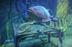 Undervattens- kungarike Arkivfoton