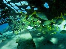 undervattens- kupol arkivbild