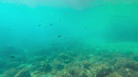 Undervattens- längd i fot räknat/fisk stock video