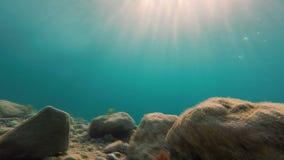 Undervattens- längd i fot räknat/fisk arkivfilmer