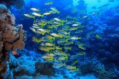 Undervattens- landskap Royaltyfri Fotografi