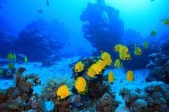 Undervattens- landskap Arkivfoton