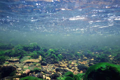 Undervattens- landskap Arkivfoto