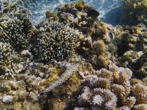 Undervattens- landskap av det tropiska havet med korallreven Tropisk kust med fisken för korallrev Royaltyfria Foton