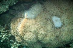 Undervattens- landskap av mjuk korallmatta Arkivbild