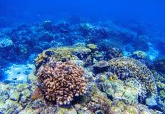 Undervattens- landskap för korallrev Olika korallformer Korallfisk i rev Arkivbild