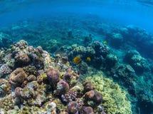 Undervattens- landskap för perspektiv för korallrev Oceanisk biosfär Arkivbild