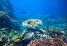 Undervattens- landskap för tropisk lagun Panorama för korallrev i vatten för öppet hav Royaltyfri Foto