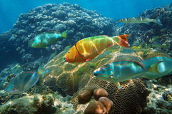 Undervattens- landskap i det karibiska havet Royaltyfri Fotografi