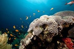 Undervattens- landskap i det röda havet. Royaltyfri Fotografi