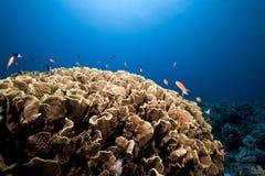 Undervattens- landskap i det röda havet. Arkivbilder