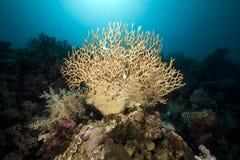 Undervattens- landskap i det röda havet. Arkivfoton