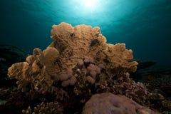 Undervattens- landskap i det röda havet. Arkivbild