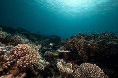 Undervattens- landskap i det röda havet. Royaltyfri Foto