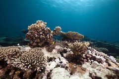 Undervattens- landskap i det röda havet. Fotografering för Bildbyråer