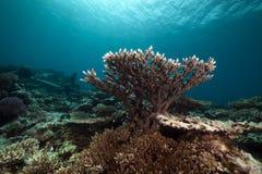 Undervattens- landskap i det röda havet. Royaltyfri Bild