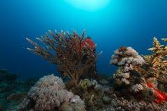 Undervattens- landskap i det röda havet Fotografering för Bildbyråer