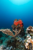 Undervattens- landskap i det röda havet Royaltyfria Bilder