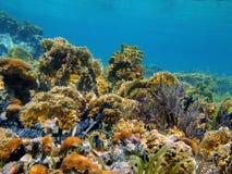 Undervattens- landskap i en karibisk korallrev Royaltyfria Bilder