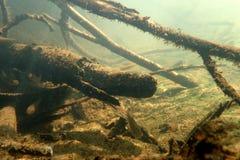 Undervattens- landskap i floden Arkivfoton