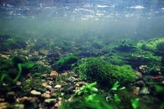 Undervattens- landskap i flodvatten Arkivfoto